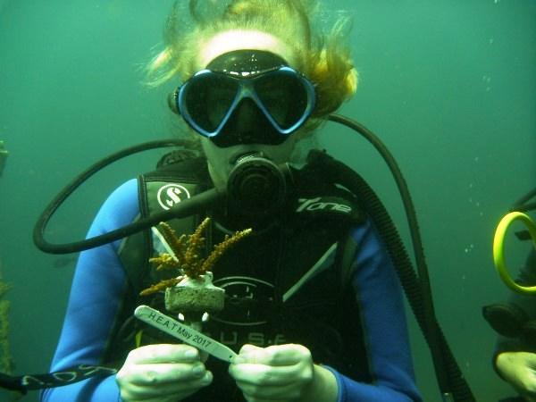 Dive volunteer with coral plug