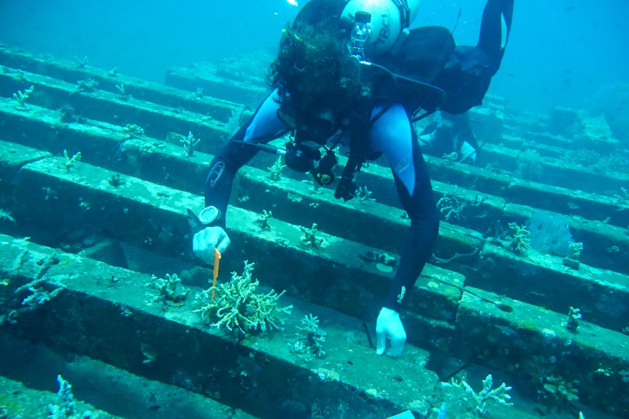 Dive volunteer with calipers